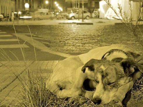 Cachorrinho abandonado - Foto Retirada do Site Arca de São Francisco