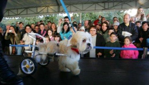 Marcelo, cachorro do ano 2009 (Foto retirada do site da Gazeta do Povo)